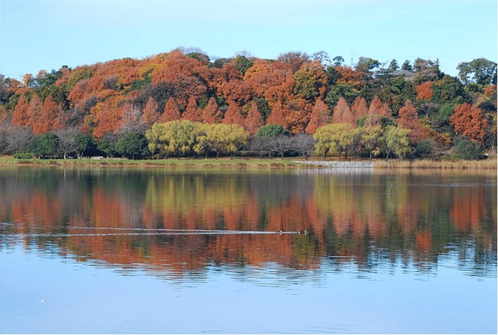 新川水系佐鳴湖