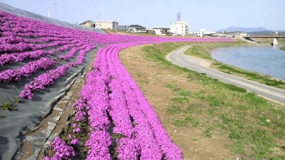 信濃川水系五十嵐川