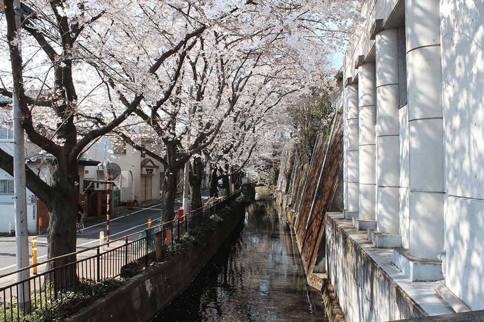 多摩川水系丸子川