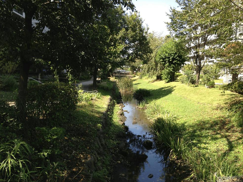 多摩川水系仙川