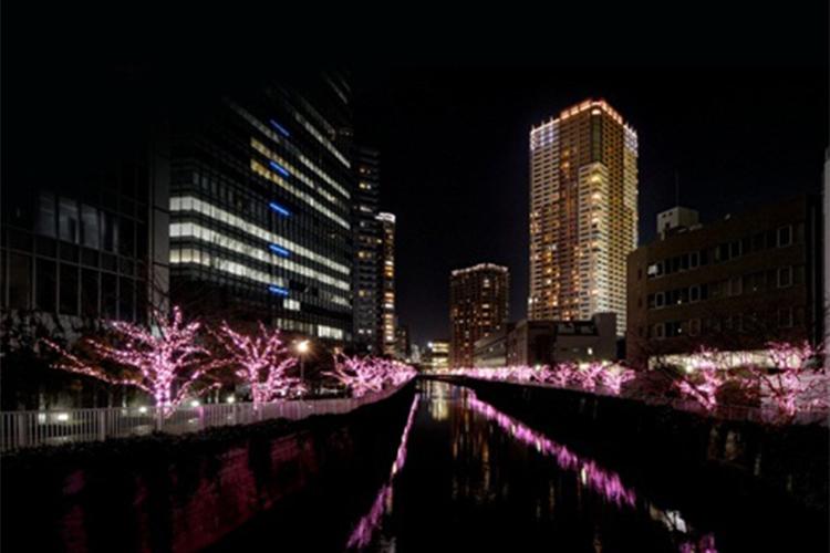 目黒川冬の桜