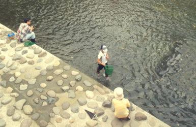 都心の川に入ってみる。神田川親水テラス