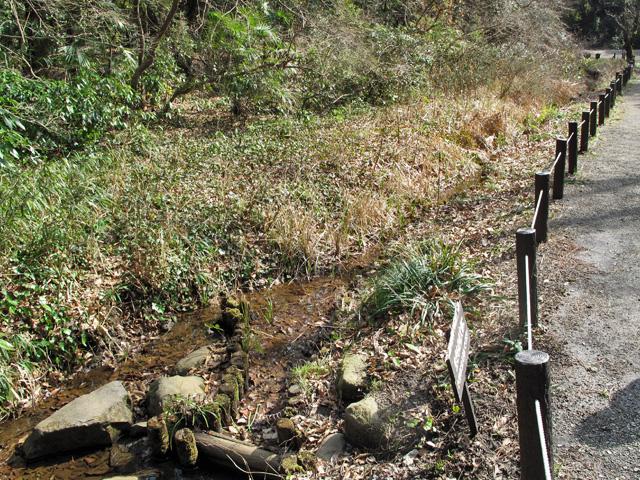 13_白金水鳥の沼からの流れ
