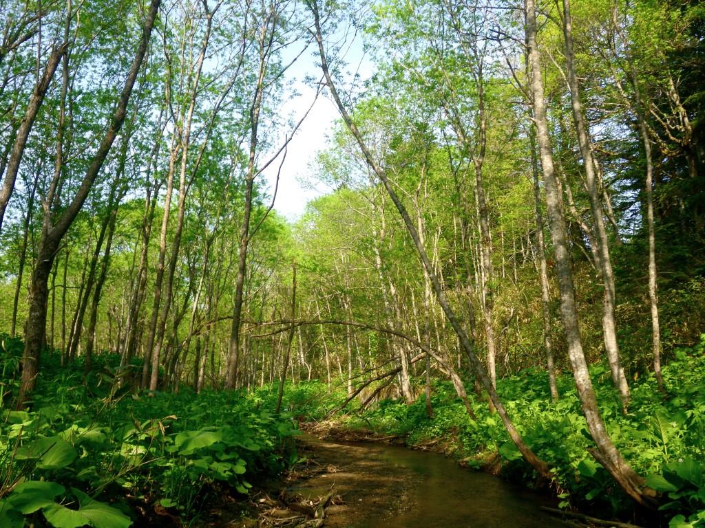 写真4:夏の川