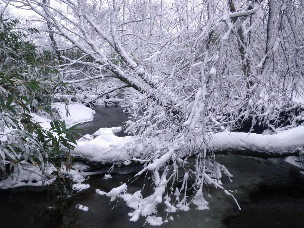写真8:冬の川