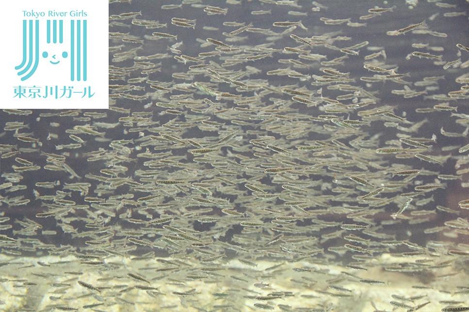 鮭の町から~標津サーモン科学館で見るサケの一生~