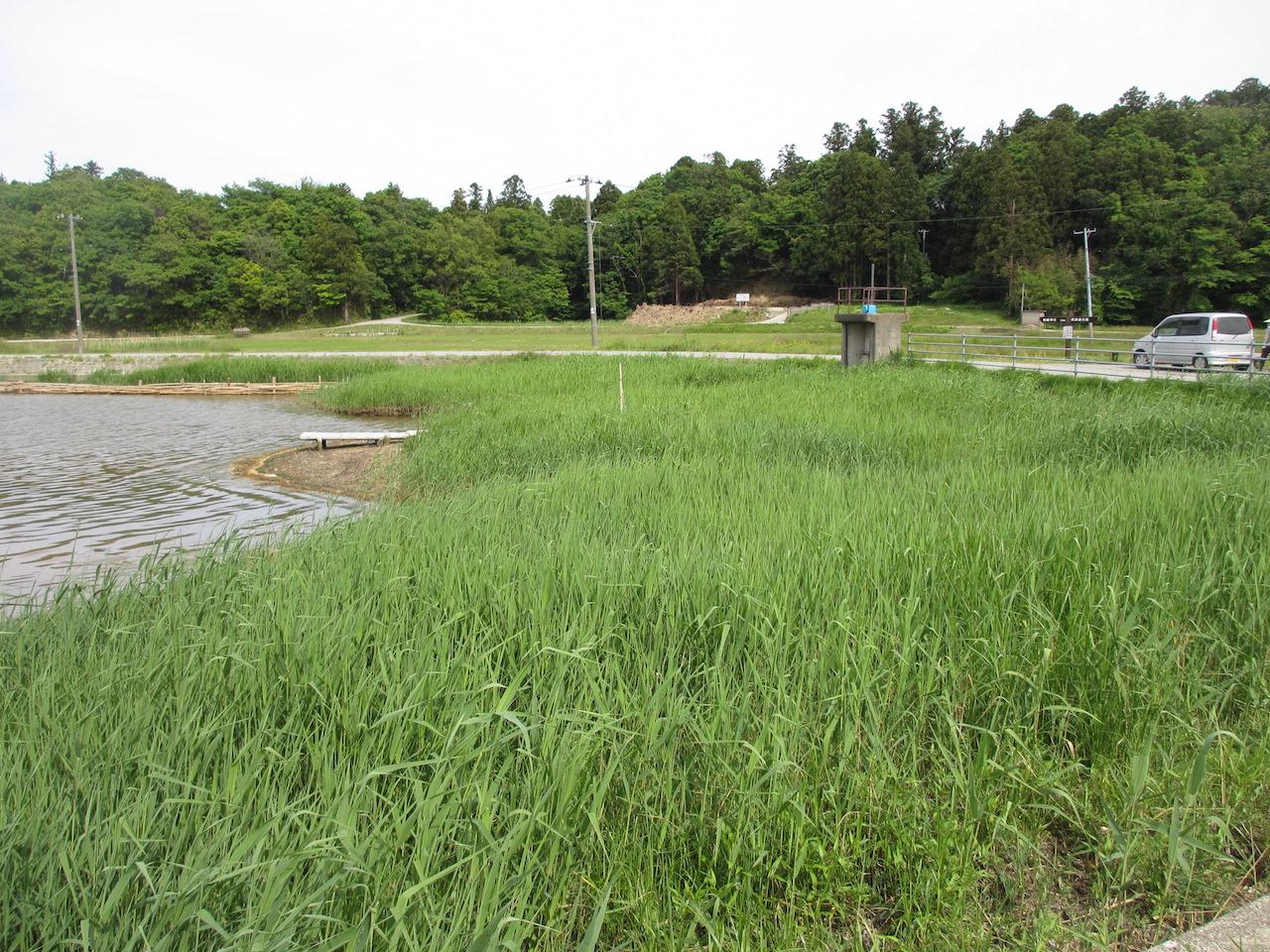 加茂湖after